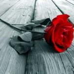 Como conseguir uma amante para o Dia dos Namorados?